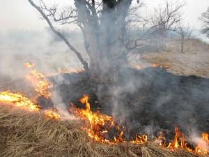 fire_around_tree